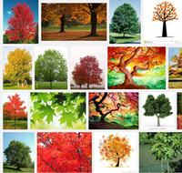 acer america - home garden Red Yellow Orange Red Maple Tree Seeds Professional Pack Seeds Pack Acer Japan China America Maple Tree NF
