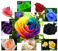 Wholesale 10 Colors Rose Seeds Plant Seed Colourful Flower Home Yard Garden Easy to Survive Plants Potted Flower Come On