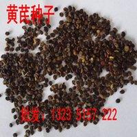 astragalus seeds - Seed herbal medicines seed cotton seed cotton Qi Qi Astragalus cotton seed cotton Wong