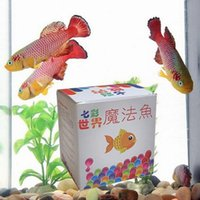 Wholesale SOIL Add WATER Equal FISH In Twenty First Century the most Magical of Aquarium Fishes the most Amazing Beautiful Fish