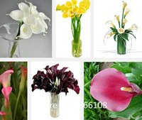 Wholesale home garden bag Calla Lily seeds DIY potted plants indoor outdoor pot seed germination rate of mixed colors