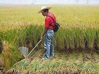 grass cutter - Agriculture machine multi mini harvester paddy wheat harvester grass cutter