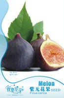 Wholesale 1 Original Packs seeds pack Ficus carica L Purple Patlican Fig Fresh Seeds Juicy High Vitamin C Tropical Fruit Lemon Fruit B115