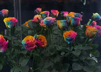 Wholesale 500pcs seeds free drop shipping Sale Rainbow Rose Seeds Seeds Per Package Rainbow Color Garden Plants