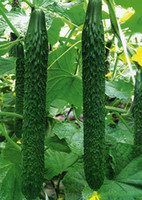 Wholesale Hot selling Cucumber seeds Cuke Seeds Green Vegetable Seeds balcony potted plants