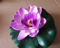 Wholesale New Color Mix Bowl Lotus Flower Seed water Aquatic Plants Nelumbo