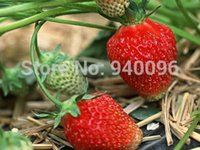 Cheap Buy 3 get 4!! Outdoor Plants Mixed Minimum Order $5 for Free Shipping Climbing Strawberry Seeds 120pcs Diy Home And Garden