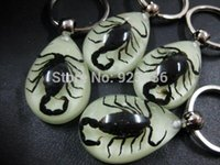 Wholesale christmas box gifts High Quality Real Insect Black Scorpion Keychain Promotion Gift Novel Gift Christmas Gift Item