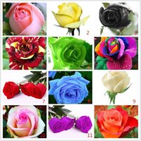 Wholesale Flower pots planters Kinds Of Seeds Rainbow rose seeds Beautiful rose seed Bonsai plants Seeds for home garden