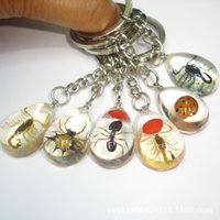 amber key - Cute Key Ring New key Ring Cute Key Ring New Womens Insect Amber and Transparent key Ring Fashion Womens Metal Key Ring
