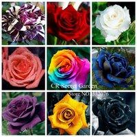 Wholesale YY FARM Rose Seeds Flower seeds Bonsai Pink Black White Red Purple Stripe golden Blue Rainbow Colors Home Garden