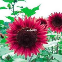 Medium sunflower seeds - 2 Packs Seeds Sunflower flower Seed a108
