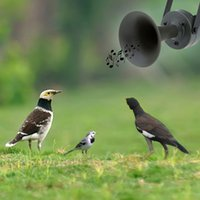 Wholesale Outdoor Hunting Decoy Bird Caller Mp3 Bird Sound with Loudspeaker W Amplifier dB Outdoor Hunting Equipment order lt no track