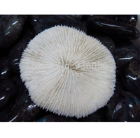 big black mushroom - big mushroom coral natural white coral fish tank decoration