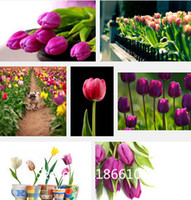 air pot garden - home garden bag varieties of tulip petals tulip seeds potted indoor and outdoor potted plants purify the air mixing