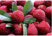 Wholesale 30 OFF Arbutrus Seeds Taste sweet seeds Myrica Rubra Seed Red Bayberry China Unique Fruit