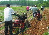 Wholesale 15 HP walking tractor mini single row potato harvester