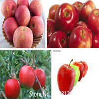 best quality seeds - Sale variety Rare Apple Seeds Organic Heirloom Seeds Fruit Seeds NON GMO Best Quality Price