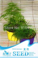 green asparagus fresh - Buy Get Can accumulate Pack Seeds Fresh And Green Herb Plant Setose Asparagus F009