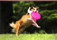 Wholesale The Pet Dog Bite The Frisbee Special Training Toys Pet Toys Random Color cm