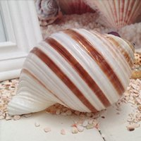 aquarium wave - 2PCS CM shell Wave Conch Household bathroom products Mediterranean romance platform Decorative fish tank aquarium shell