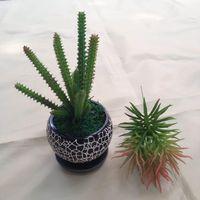 artificial cactus - High simulation cactus succulents DIY simulation floral ornaments artificial flowers home decor Succulents Cactus