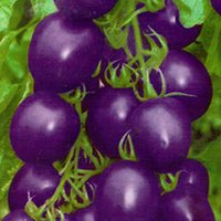Wholesale 2015 new hot Bag Vegetable Organic seeds Purple Tomato Seed Pack Heirloom Fruit TE
