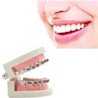 Cheap Dental Orthodontic Standard Teeth Tooth Model METAL Brackets & LIGATURE TIES