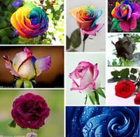 Wholesale rainbow rose colorful seeds home DIY plants