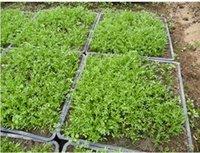 Cheap herb seeds organic Best seed garden