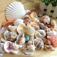 Wholesale Approx g Beach Mixed Sea Shells Shell Craft SeaShells Aquarium Aqua Home Wedding Tank Decor