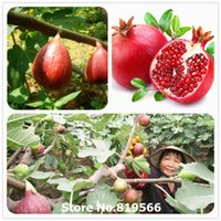 Cheap Real chinese Figs seeds indoor Ficus carica Bonsai Fruits Tree Outdoor Garden Fig Plants countryard Sementes