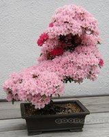 Cheap 100pcs Pretty Bonsai Little Plant, Mini Potted Pink Cherry Tree Seeds 50 Piece