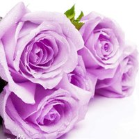 Wholesale Beautiful Cheap Rainbow Rose Seeds Seeds Colorful Rose Flower Seeds Black Pink Red Charming Green Yellow Purple Royal Blue