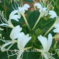 al por mayor flores de la madreselva-Las semillas de la madreselva de los bonsais 100pcs 10kinds mezclan la nueva planta de las semillas de flor para el envío libre del jardín