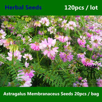 Herb Seeds astragalus plants - Very Popular Astragalus Membranaceus Seeds Flowering Plant Astragalus Propinquus Seeds Family Fabaceae China Medicine Huang Qi Seed