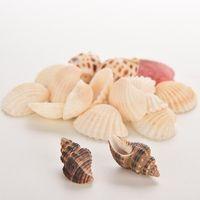 Wholesale New g Bag Beach Mixed SeaShells Mix Sea Shells Shell Craft SeaShells Aquarium