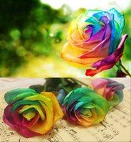 garden flower seeds - 100 Rare Rainbow Rose Flower Seeds Your Lover Multi color Plants Home Garden