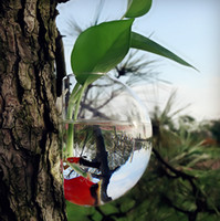 Wholesale Glass Air Plants Wall Glass Planter Vase Wall Bubble Terrarium fighting fish tank for home decoration indoor wall decor