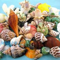 Wholesale 50 Mixed Different Conch Sets Natural Seashell Aquarium Ornament Fish Tank Landscape Sea Snail Home Decoration
