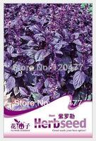 basil flowers - Aromatic plants Dark purple basil Dark purple basil seeds Aromatic plants seeds about particles