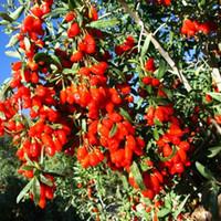 chinese food - Ningxia pure goji kg berries certified organic Chinese Medlar healthy goji berry best food to eat dried fruit in blooming tea