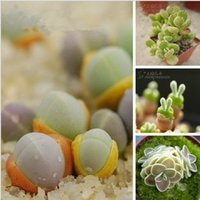 Wholesale 100pcsMix Succulent egg shaped seeds Lithops Gypsophila acutifolia Bonsai plants Seeds for home garden Seeds bag