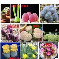 Wholesale 100 Rare Mix Lithops Seeds Living Stones Succulent Cactus Organic Garden Bulk flower seeds
