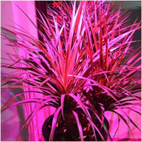 Wholesale 2015 NEW Full spectrum LED Grow lights W E27 LED Grow lamp bulb for Flower plant Hydroponics system AC V V V grow box