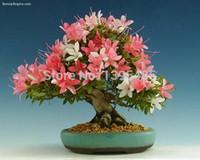 Wholesale Flower bonsai seeds flower plant bonsai indoor petunia petals flower seeds bonsai balcony