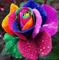 Wholesale 500 Perennials Beautiful Flowering Roses Rose Seeds Rainbow Colors Y289