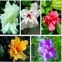 Wholesale 30 OFF bag Hibiscus seeds flower seeds potted plants budding varieties mixed colors