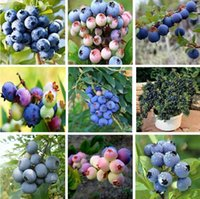Wholesale Blueberry seeds import and blueberries the seeds planted fruit seeds trees species plants pack pieces