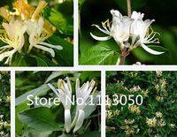 al por mayor flores de la madreselva-¡Venta! La madreselva libre de los bonsais de las clases del envío 100pcs 10 siembra la planta floreciente orgánica genuina del jardín de las semillas de flor del 100%